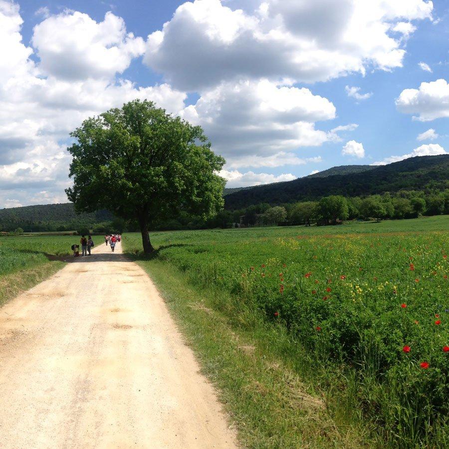 Hiking via Francigena