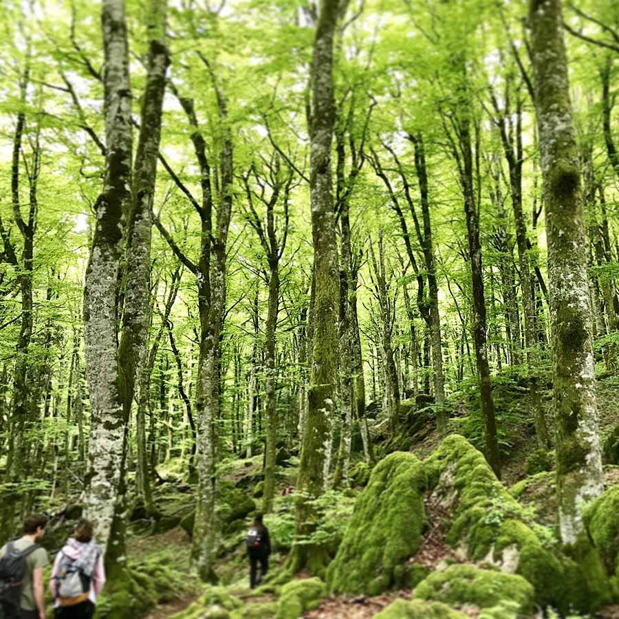 Bagno nella Foresta La Verna