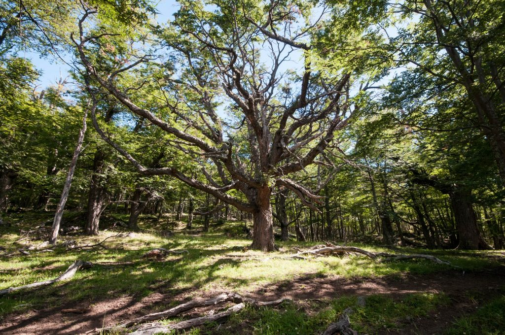 relax forest bathing