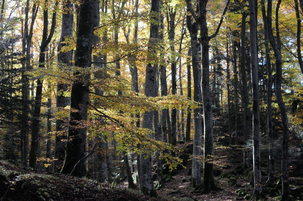 forest bathing in toscana