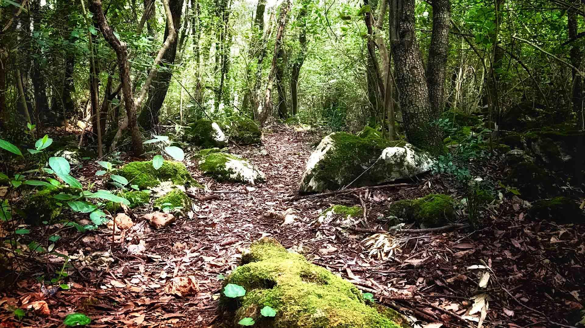 bagno nella foresta montagnola senese