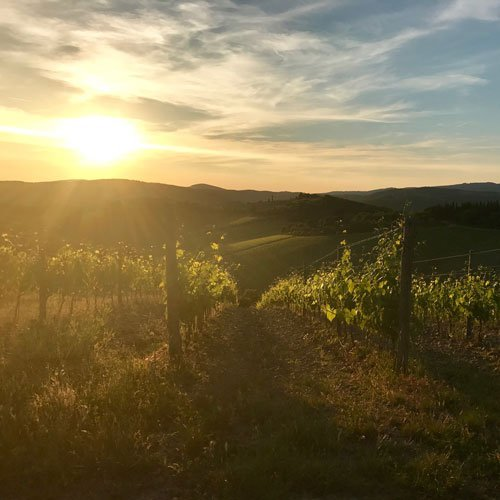 Hiking and Wine Tour in Chianti