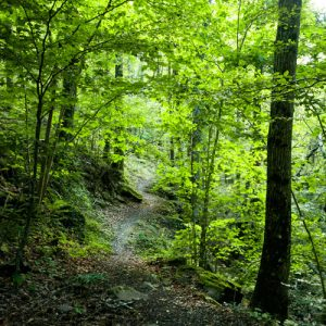 forest bathing in tuscany