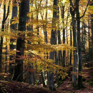 fall foliage la verna