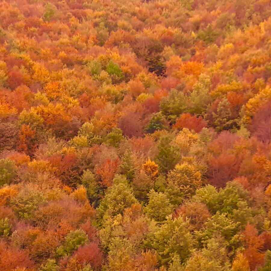 fall foliage casentino
