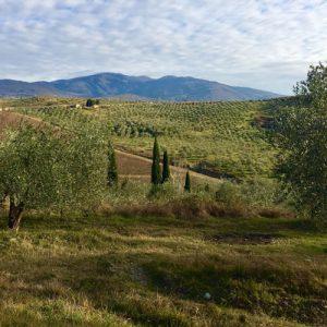 trekking campagna fiorentina