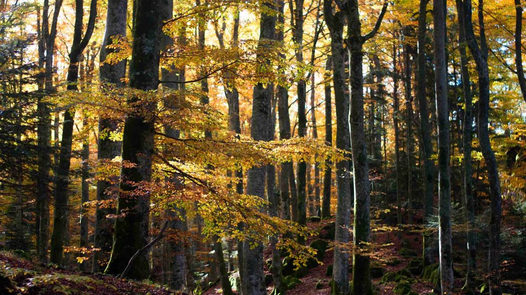 trekking fall foliage in Tuscany