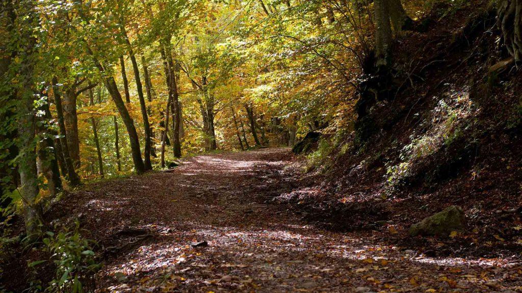amiata fall foliage