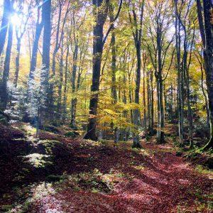fall foliage AMIATA