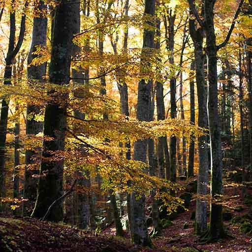 fall foliage toscana