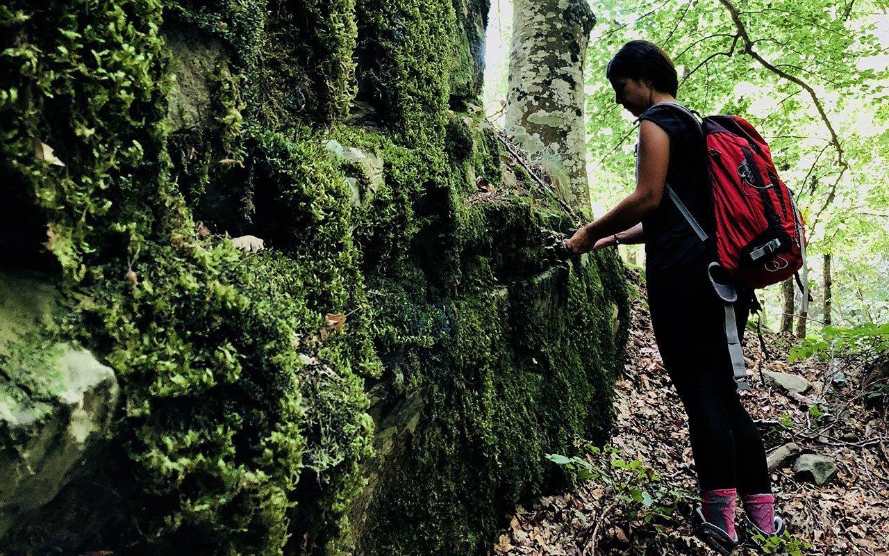 forest bathing foreste casentinesi