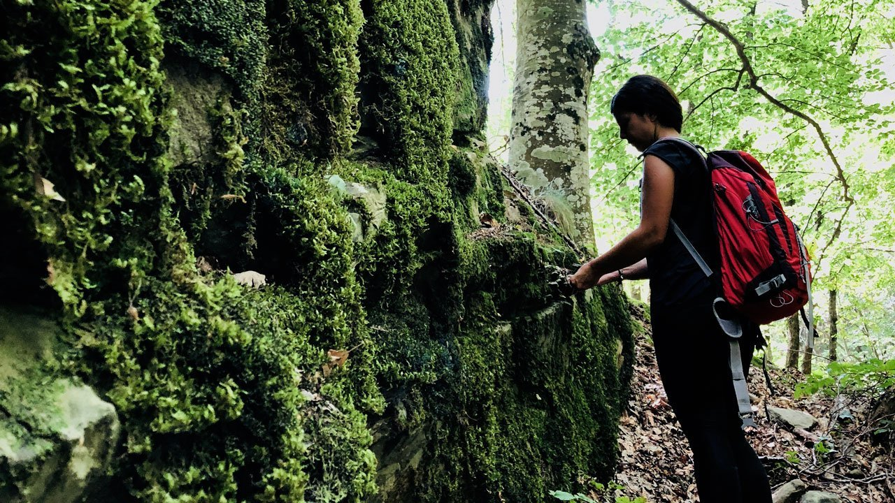 forest bathing italy casentino forest