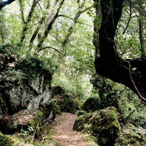 forest bathing italy Tuscany