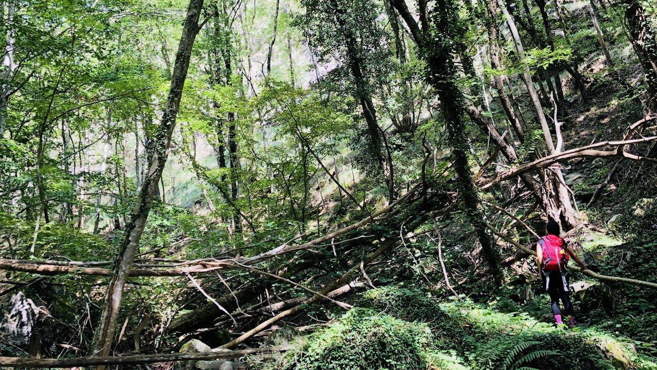 forest bathing tuscany italy