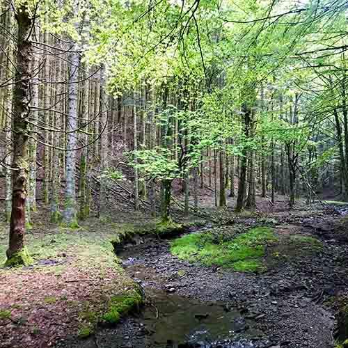 forest bathing camaldoli