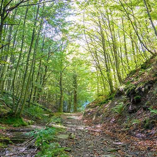 mugello foresta