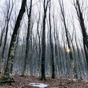 Bagno nella Foresta a Reggello