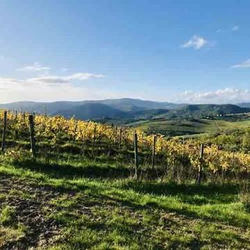 Wine Trek a Montefiesole
