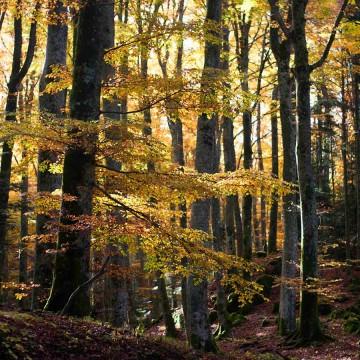 Bagno nella Foresta alla Verna